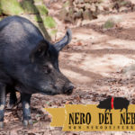 Nero dei Nebrodi