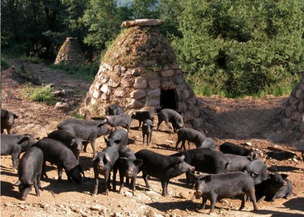 LE PORC NOIR - la Sicile, terre de la qualité
